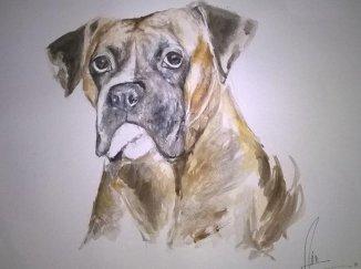 Rocco perro Boxer de Argentina y de mi tío